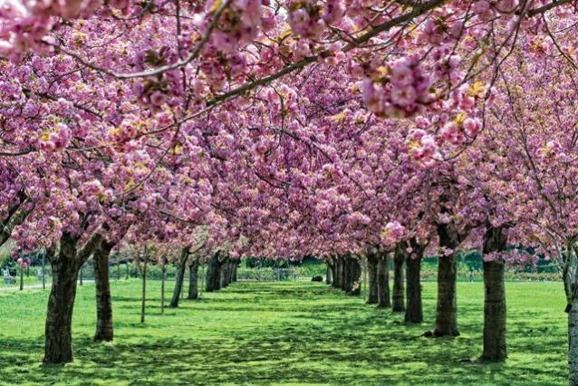 I 5 giardini pi belli del mondo - I mobili piu belli del mondo ...