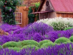 Come realizzare un giardino mediterraneo consigli per for Giardino fiori