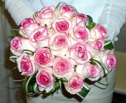 rose-scarlate