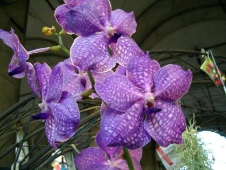 Come coltivare le orchidee in casa donna fanpage for Orchidee in casa