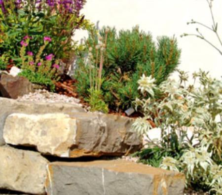 Costruire un giardino roccioso come e dove realizzarlo con for Giardino roccioso con piante grasse
