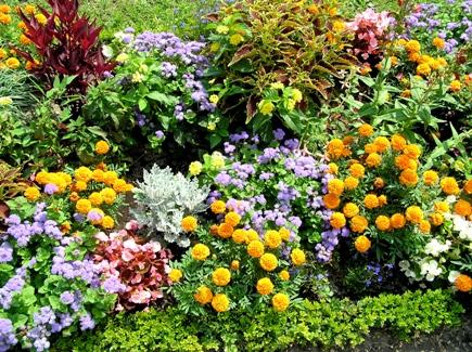 aiuole per giardino fiori e piante : Obi, centro per il bricolage primavera per il tuo giardino Donna ...