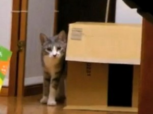 Il gatto che fa stalking (VIDEO).