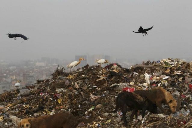 La Giornata Mondiale dell'Ambiente nella Terra degli sprechi alimentari.