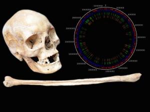 Dagli scheletri medievali, la chiave per conoscere l'origine della lebbra.