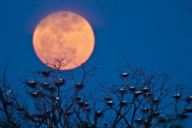 Arriva la Super Luna: occhi al cielo domenica 23 giugno.
