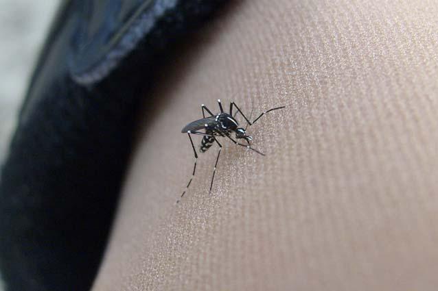 Perché le zanzare pungono proprio me?