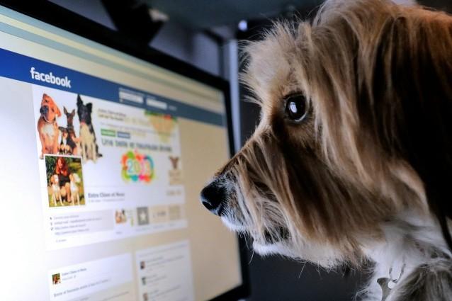 L'uso frequente di Facebook può rendere depressi.