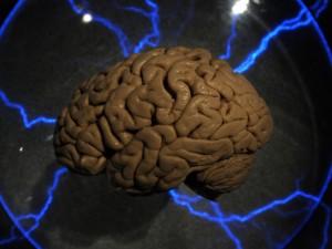 Cervello umano bolle nel teschio: dopo 4000 anni è in buono stato.