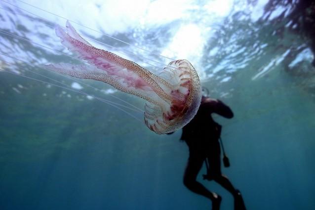 Cinque cose da sapere sulle meduse.