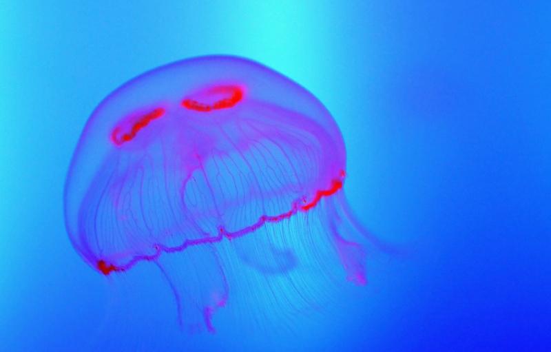 "Colori \""fluo\"" al Gran Aquarium di Saint-Malo, Francia"