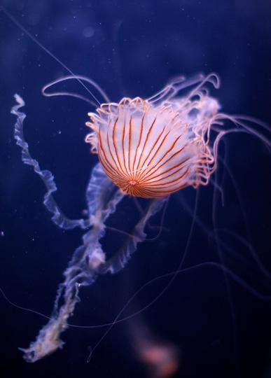 Un ombrellino al Sea life aquarium, Koenigswinterwestern, Germania