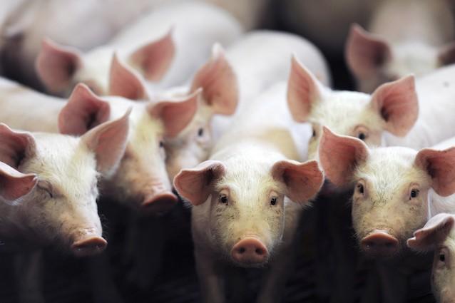 5 animali con cui offendiamo le persone.