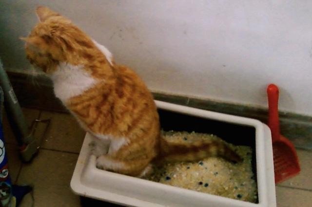 Gatti drogati grazie all 39 erba gatta uno studio spiega for Erba gatta effetti