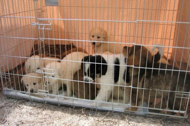 Fermiamo il traffico illegale di cuccioli, gli animali non sono giocattoli.