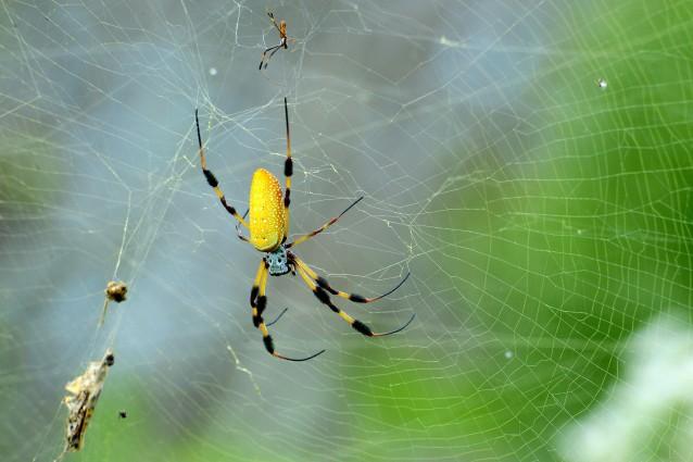 Il segreto della tela del ragno, conducibilità termica superiore al rame e al silicio.