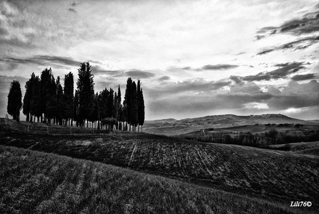 La fotografia in bianco e nero piccolo corso di for Foto di alberi da colorare