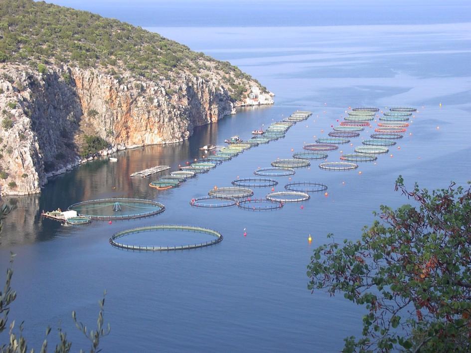 Per la prima volta al mondo si alleva pi pesce che manzo for Allevamento pesci