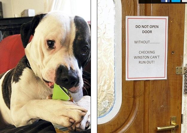 Regno unito cane feroce azzanna i postini ora rischia di for Unito lettere