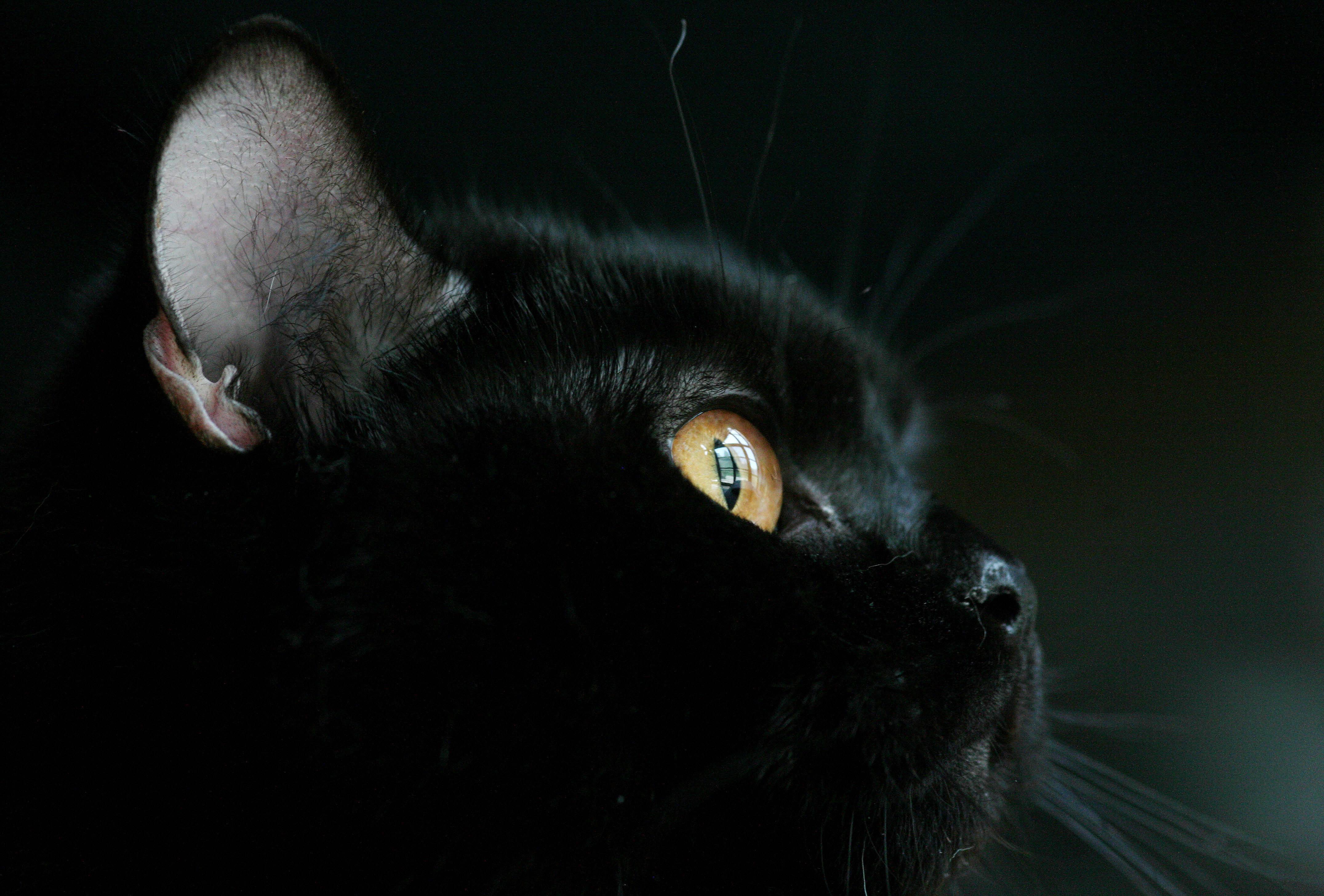 TrekLens | Non scherzare con il gatto nero Photo Audiobooks