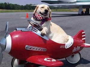 Viaggiare in aereo col cane