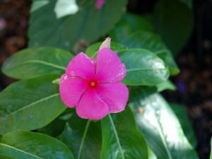 fiori expo sagre