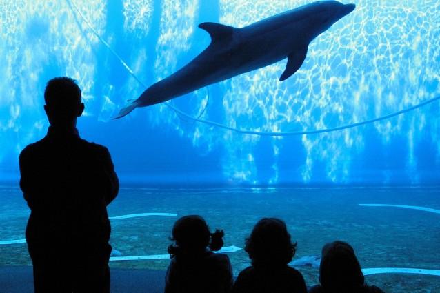 Gli acquari più grandi del mondo, alla scoperta dei pesci più belli.