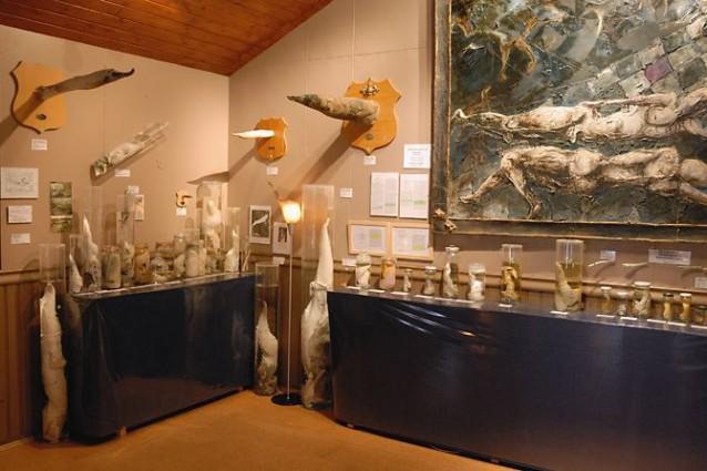 Il Museo del Pene in Islanda, la collezione più strana del mondo.