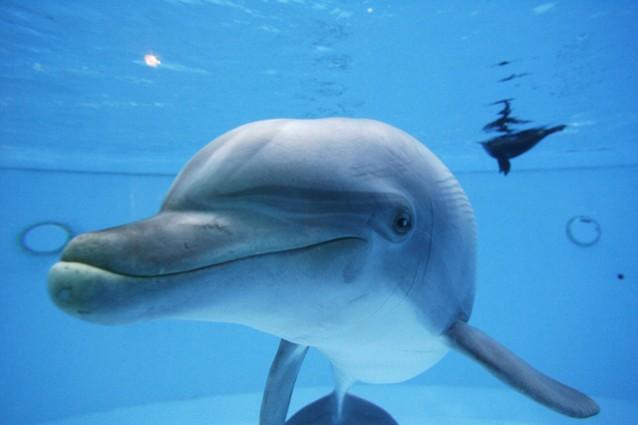 Un amore immenso per i delfini, dove incontrarli nel Mediterraneo (FOTO).