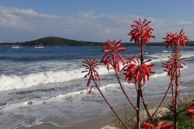 04 maldive destinazione paradiso - 2 5
