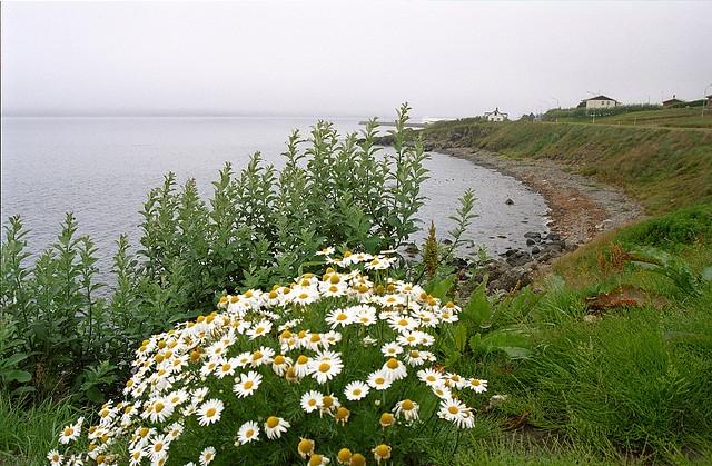 Agosto: Islanda