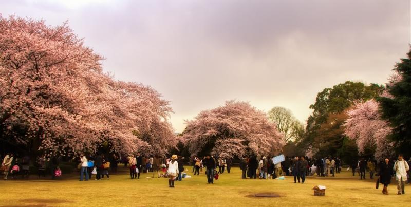 Maggio: Giappone