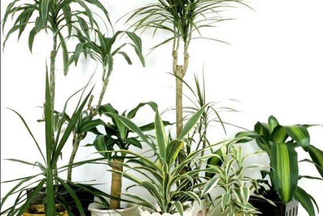 Le 9 piante da appartamento per purificare l'aria in casa
