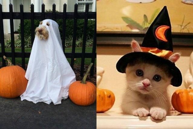 Costumi di halloween per cani e gatti travestimenti per for Animali da casa