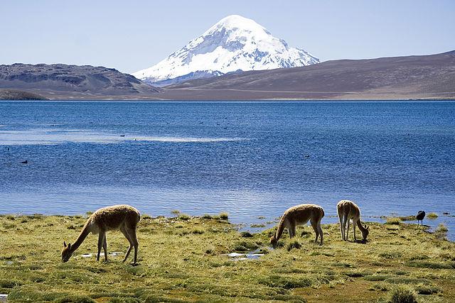 Lago Chungara e Vulcano Sajama nel Parco nazionale Lauca, Cile (Foto da Wikipedia).