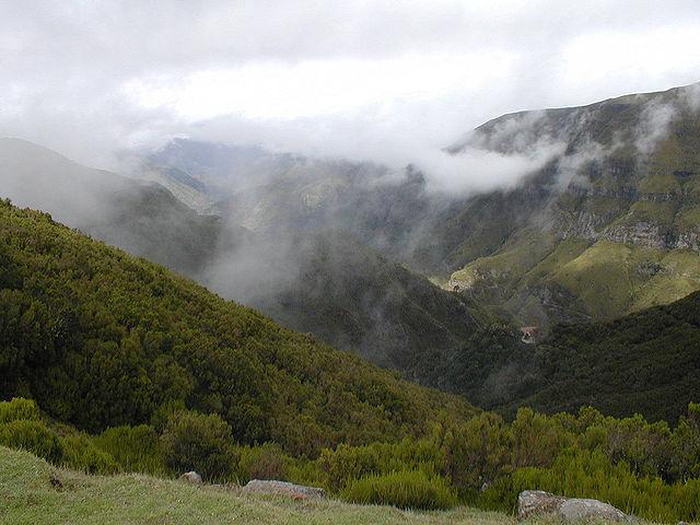 La lussureggiante natura di Madeira – Foto Wikimedia Commons