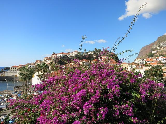 Madeira, l'isola dei fiori – Foto Pixabay