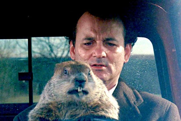 Febbraio: il Giorno della Marmotta negli USA!