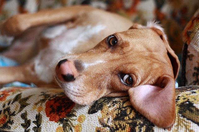 Fate sempre attenzione al comportamento del vostro cane