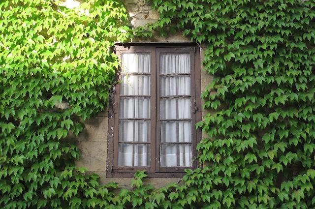 5 piante da balcone che resistono al gelo dell inverno - Piante per coprire muri ...