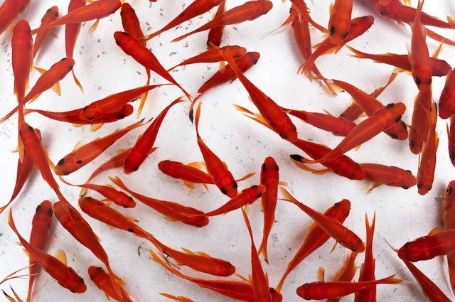 I cacciatori di alieni hanno trovato una piramide su marte for Dove comprare pesci rossi