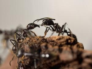 Il falso mito delle formiche lavoratrici che, in realtà, sono pigre