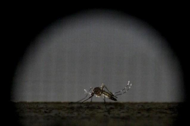 Cinque cose da sapere a proposito dello Zika virus