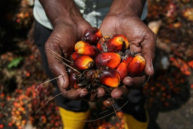 Coop, via dagli scaffali i prodotti che contengono olio di palma