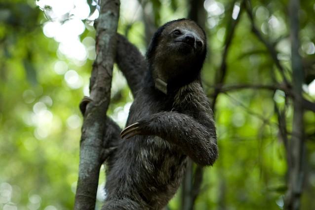 Per i bradipi andare in bagno una questione di vita o di - Andare in bagno ...