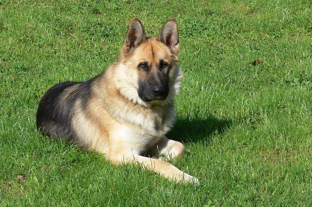 Cani Cassazione: è reato lasciarli in giardino senza compagnia