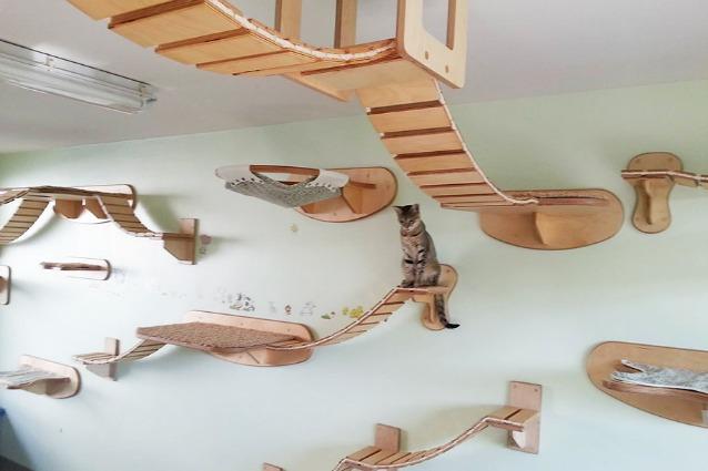 Con goldtatze la casa si trasforma in un parco giochi per - Cucina casalinga per gatti ...