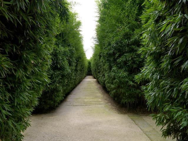 Immagini dei corridoi in bambù del Labirinto (© Franco Maria Ricci/Foto Massimo Listri)