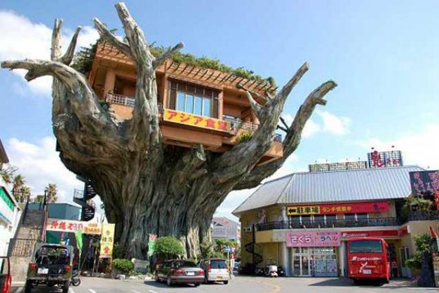 Le case sull 39 albero pi fantasiose al mondo for Case particolari