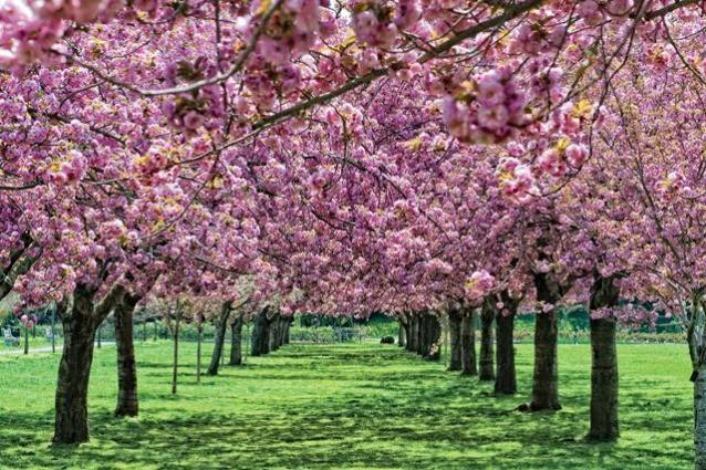 I 5 giardini più belli del mondo